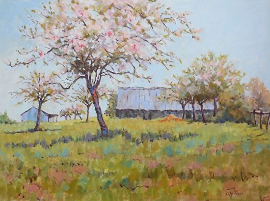 Apple Blossoms in Normandy France 30x40w -