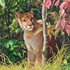 Dappled Light - cougar