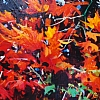 "Red Foliage #2 by Nancy O'Toole Acrylic ~ 8"" x 12"""
