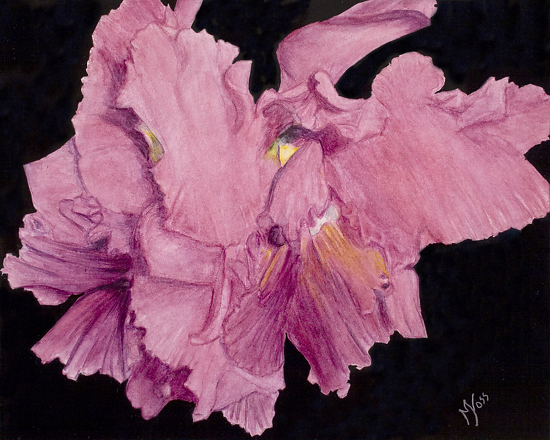 Orchidstration - Watercolor