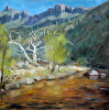 Sabino Canyon Morning