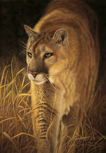 Golden Boy by Joe Kronenberg Pastel ~  x
