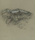 Lobster #1 by Elizabeth Torak charcoal and conte ~ 14 x 12 5/8