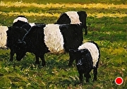 "Galloway Gathering by Brian Kliewer Oil ~ 5"" x 7"""