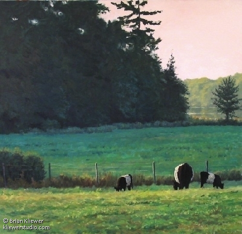 "Aldermere Galloways by Brian Kliewer Oil ~ 30"" x 30"""
