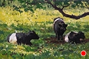 "Belted Galloways, Seeking Shade by Brian Kliewer Oil ~ 4"" x 6"""