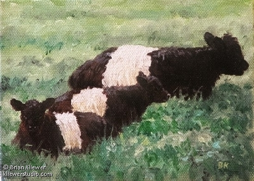 "Belted Galloways Series - Family Portrait  oil study by Brian Kliewer Oil ~ 5"" x 7"""