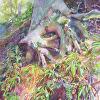 Strap Ferns