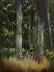 Trees in Kozłowka Morning Light (Ref 1047) by Inka Zamoyska
