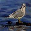 Chesapeake Beach Gull