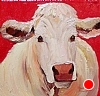 White Kerry Cow On Red by Norma Wilson Oil ~ 12 x 12