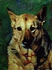 Sheeba by Norma Wilson Pastel ~ 11 x 14