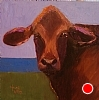 "Brangus Among Us by Norma Wilson Oil ~ 6"" x 6"""