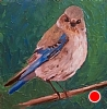 "Female Mountain Bluebird by Norma Wilson Oil ~ 6"" x 6"""