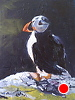 "Irish Puffin Bird by Norma Wilson Oil ~ 6"" x 8"""