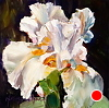 "Iris Delight! by Norma Wilson Oil ~ 6"" x 6"""