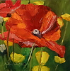 "Poppy Profusion by Norma Wilson Oil ~ 6"" x 6"""