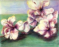 Magnolia Morning SOLD by  Anthe Intaglio - Drypoint ~  x