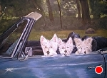 3 Dogs in a Convertible William Daisy  and Oscar by Betty Ann Morris Oil ~ 16 x 12
