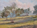 Olives in Morning Light by Val Carson Oil ~ 11 x 14