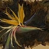 "Bird of Paradise by Ernie Marjoram Oil ~ 11"" x 14"""