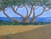 """Coastal Oak Study"" by Justin Holdren"