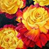 Confetti Roses