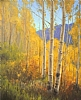 September Gold by Stacey Peterson Oil ~ 36 x 30