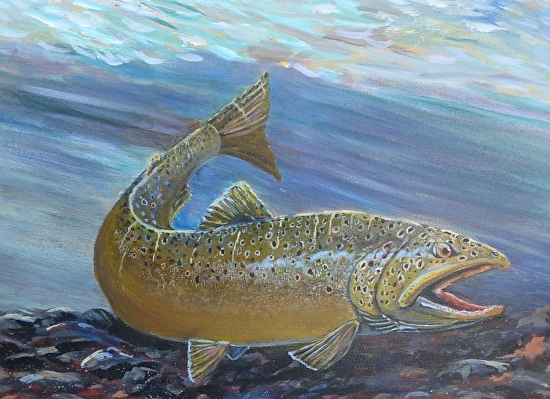 Brown trout 2 - Acrylic
