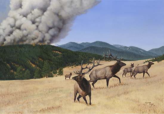 Mandatory Evacuation - Oil