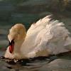 Linda's Swan
