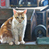 The Workshop Cat