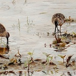 Kimberly Wurster - 27th Annual National Juried Maritime Exhibition-Guest Featured Artist-Upcoming