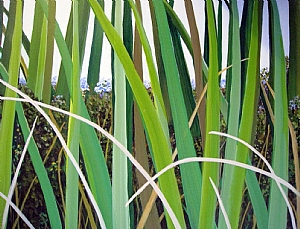 "Sea Grass I by Lorraine Duncan Acrylic ~ 16"" x 20"""