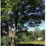 Cynthia Rosen - Painting Trees