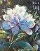 Garden Peony by Nancy Everett
