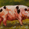The Spotted Sow