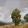 Holt- The Search for the Secret Structure of Junipers III- v2- 9x12- oil- 2014- plein air