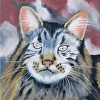 """Rufus"" The Cat"