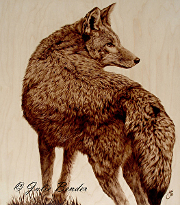 "On the Alert (coyote) by julie bender Pyrography ~ 18"" x 16"""