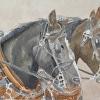 """Harney County Horse Pull II - 2014"""