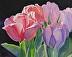 Sunstruck Tulips by Kristina Occhino