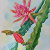 Orchid Cactus, Plein Air Study 3