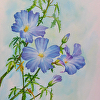 Blue Hibiscus, Watercolor Study