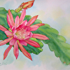 Epiphyllum Orchid Cactus, Watercolor Study 2