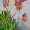 Aloe Nobilis, Watercolor Painting