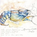 Blue American Lobster by Sarah Madsen Watercolor ~ 8 x 8