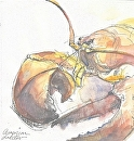 American Lobster by Sarah Madsen Watercolor ~ 8 x 8