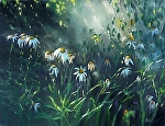 Daisy Rain by Mary Aslin Pastel ~ 18 x 24