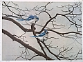 blue jays in winter by Tom Heflin lithograph print ~ 18 x 24